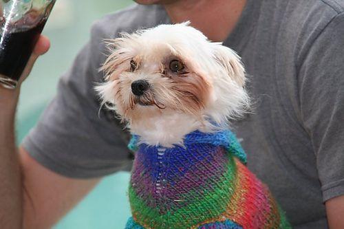 113 besten Doggie sweaters Bilder auf Pinterest | Haustierkleidung ...