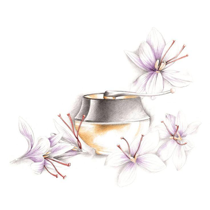 Illustration cosmétique et plante Florence Gendre