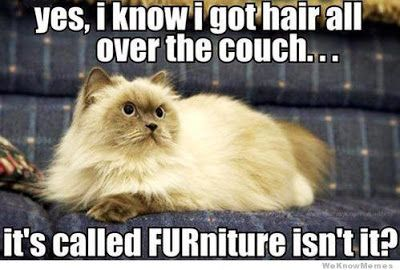 Lol u know the comedy is real when a cat joke makes me laugh