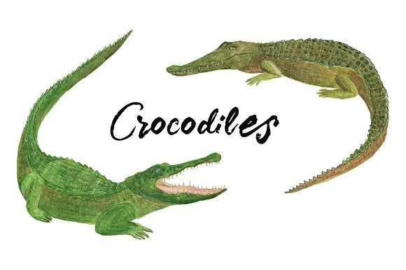 Watercolor crocodiles by ramika on @creativemarket