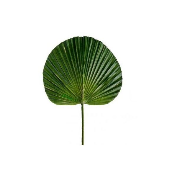 Small Fan Palm Leaf - Artificial Greenery & Foliage - 1001 Artificial... ($174) ❤ liked on Polyvore