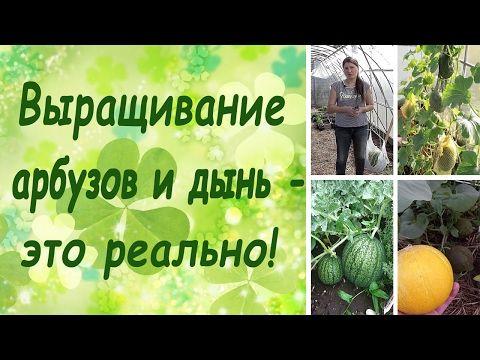 Выращивание арбузов и дынь - это реально! (семинар, основные правила) - YouTube