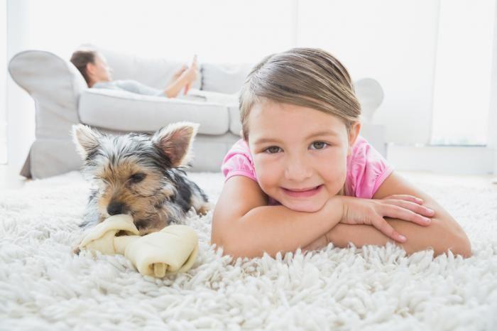 #интересное  Недорогая чистка ковров (4 фото)    Дома у детей началась аллергия, мы не могли понять на что. Время осеннее, никакой пыльцы или насекомых на улицах. Кошка у нас живет давно, раньше на нее никто не чихал. Причина оказалась банальна и проста — наши ков�