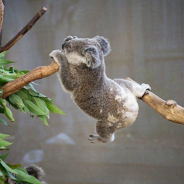 @australiaのInstagram写真をチェック • いいね!83.4千件