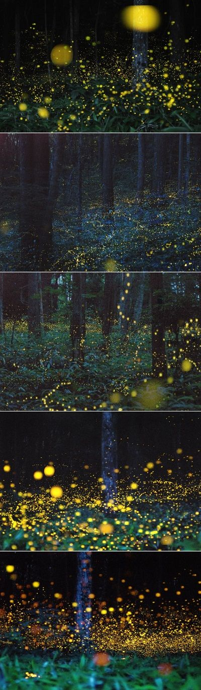 Enchanting firefly full forest in the Chūgoku region of Japan via http://diana212m.blogspot.com/