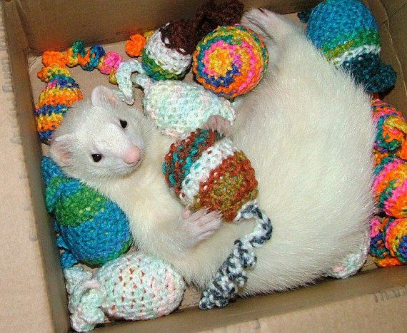 1000 Ideas About Ferret Cage On Pinterest Ferrets