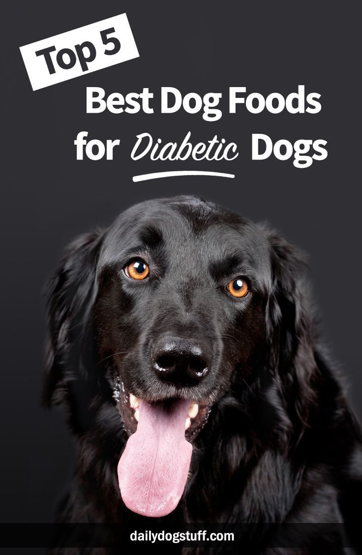 Top 5 Best Dog Foods For Diabetic Dogs Diabetic Dog Best Dog