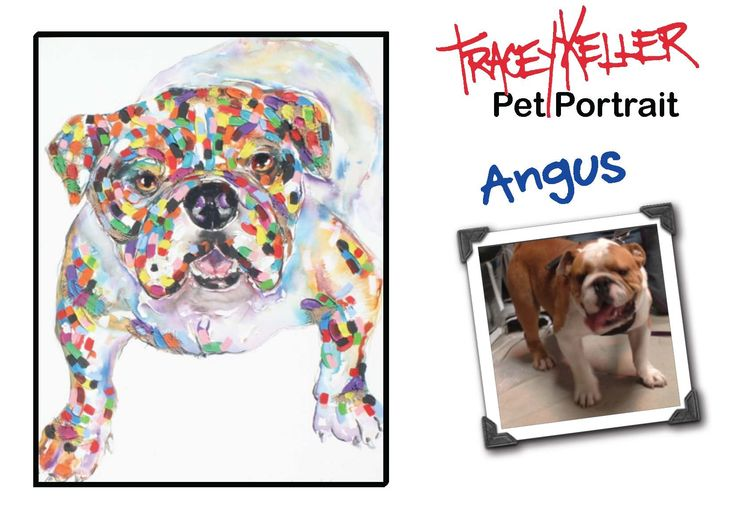 Meet Angus - The pic here shows you the photograph and the painting. Want your pup to be next TK Supermodel?? Submit/Vote your entry now if you haven't already!!  https://www.facebook.com/TraceyKellerAD…/app_451684954848385 For mobile users, please try this link: http://woobox.com/gm8z6d Tracey will personally judge and select some canine models to be painted, and YOU can also vote for your favourite pup to win!! **Please invite your family and friends to like our page and vote for your…
