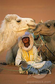 ... Boy of Tuareg tribe looking to his camels Camel caravan Sahara Desert