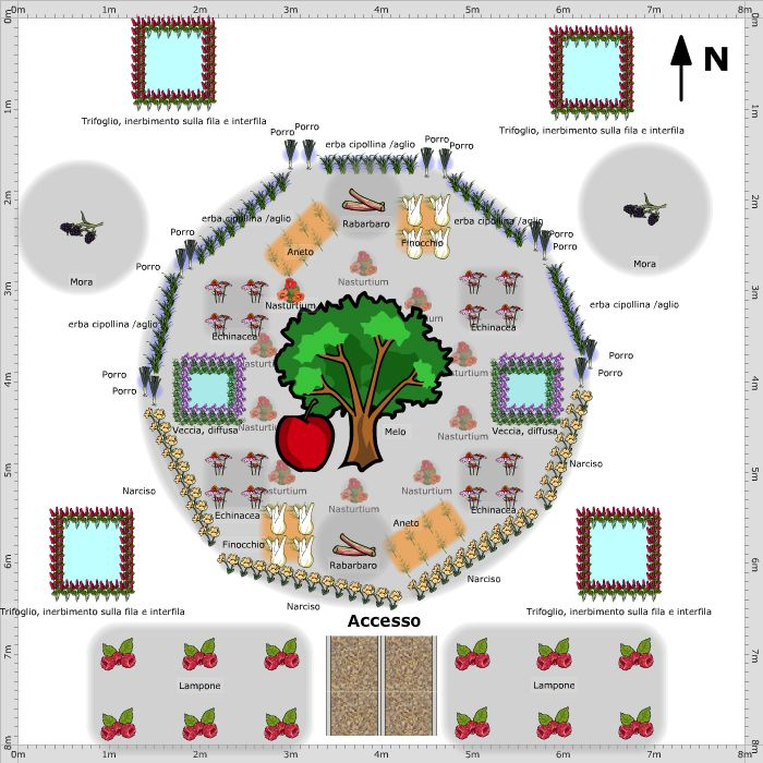 Garden Plan - 2015: fruit tree guild