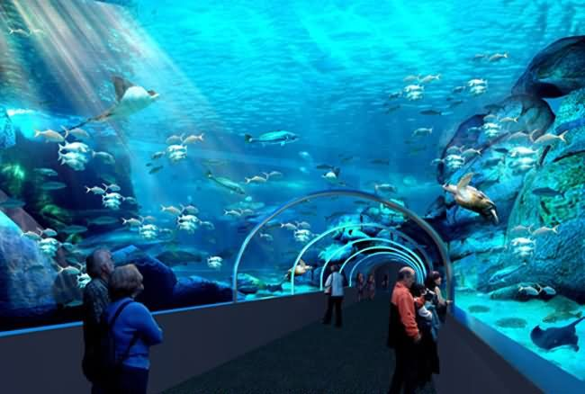 Two Oceans Aquarium (Cape Town, Southern Africa)