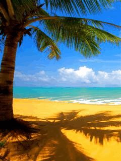 Download Animated 240x320 «Beautyful beach» Cell Phone ...