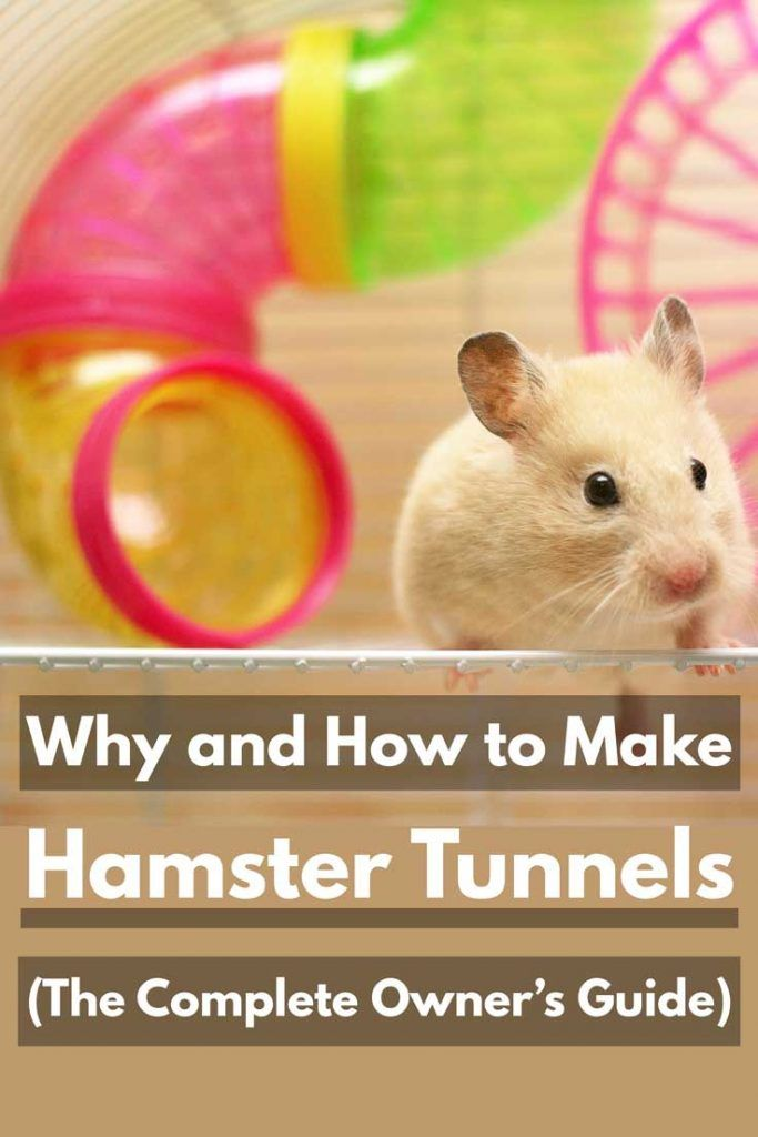 Why And How To Make Hamster Tunnels The Complete Owner S Guide Hamsters 101 Hamster Life Hamster Hamster Care