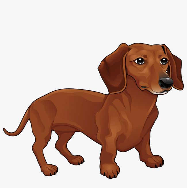 Vector Dachshund Yellow Small Animal Png And Vector With