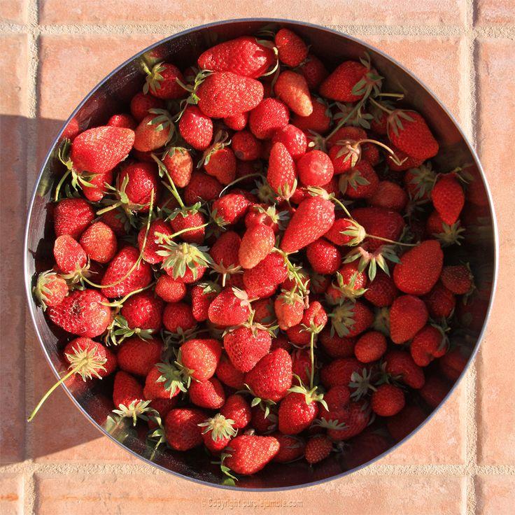 fraises du jardin - Purple Jumble