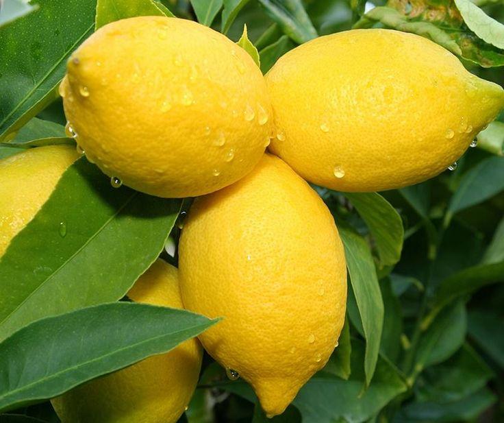 Cytryna postrzegana jest przede wszystkim jako zdrowy owoc używany w codziennej diecie. Ma również zastosowanie w branży kosmetycznej - wyciśnięty sok z cytryny z powodzeniem może zastąpić tradycyjny dezodorant. Dzięki swoim właściwościom odświeża skórę i neutralizuje pocenie.