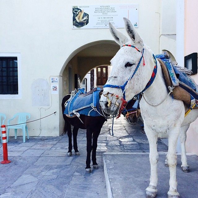 #Donkeys #Santorini #Greece Photo credits: @ninadrksn