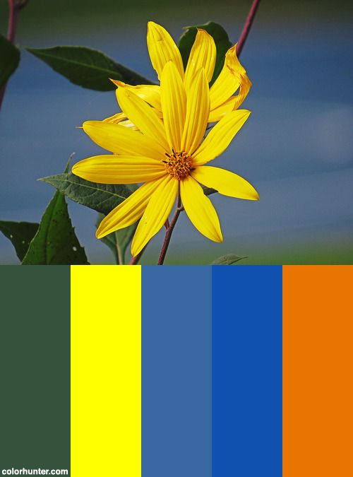 It's Autumn With The Color Of Summer. Color Scheme from colorhunter.com