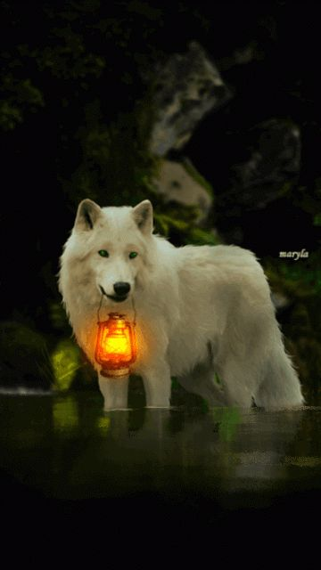 lobo farol gif                                                                                                                                                                                 Más