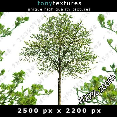 Summer Cutout Tree 23 High Resolution