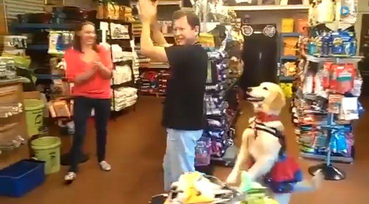 Video: de moves van deze golden retriever zijn niet mis!