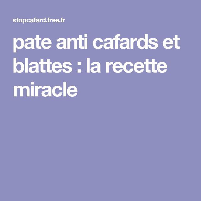 pate anti cafards et blattes : la recette miracle