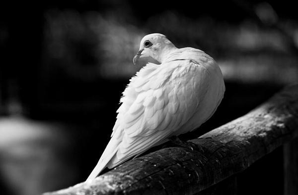 'Peace' by Paulo Perestrelo © 2012 - #FineArt & #Wildlife #Photography