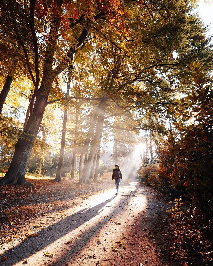 Autum in the Woods
