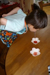 Caterpillar to butterfly lessons:  Put some sweet juice into small flower shaped dishes and have them drink it through the straw like a butterfly drinks nectar through its probocis. jh