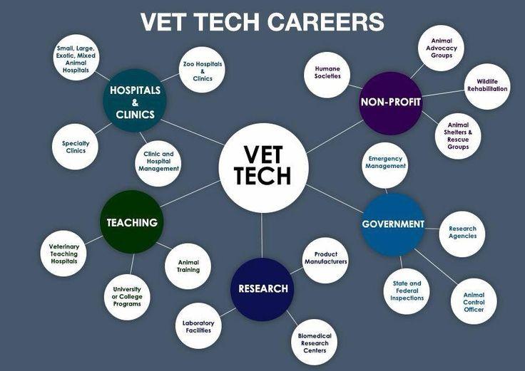 So many things a vet tech can do!