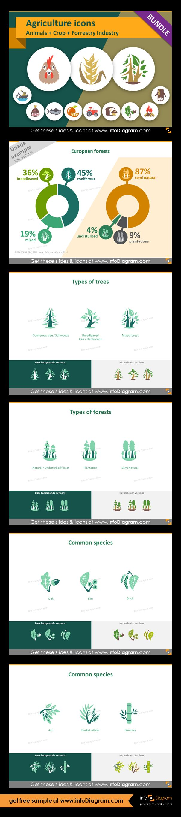 Food and Agriculture icons: Animals, Crop Cultivation, Forestry. All symbols in simple flat style, suitable for Metro UI style graphics. Icons provided in 5 versions. Statistics about European forests - chart. Icons showing types of trees and forests. Graphics of: softwoods, hardwoods, mixed forest, undisturbed forest, plantation, semi natural forest. Common species contain: oak, elm, birch, ash, basket willow, bamboo.