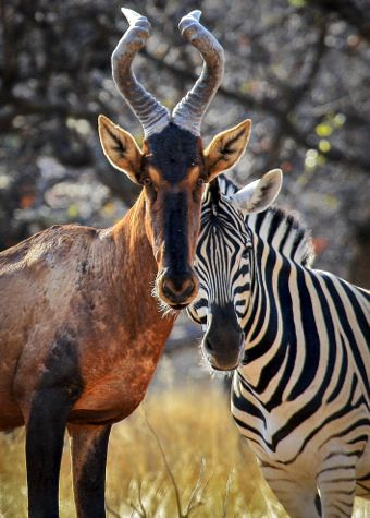 Odd couple - ©Petra Warner / Namibia Photo Expedition / Wilderness Travel http://photoblog.wildernesstravel.com/namibia-wildlife-2/#prettyPhoto[1]/3/