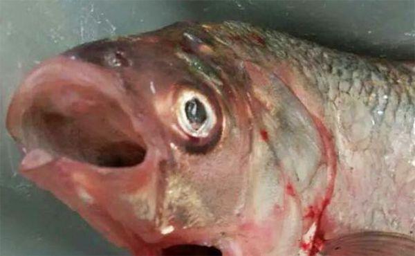 Veja o que um pescador pegou em uma de suas pescarias em um lago australiano. .