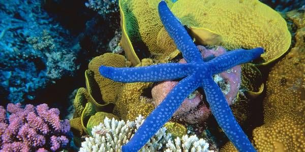 Grande Barriera Corallina in pericolo: l'Australia nasconde i dati sul declino