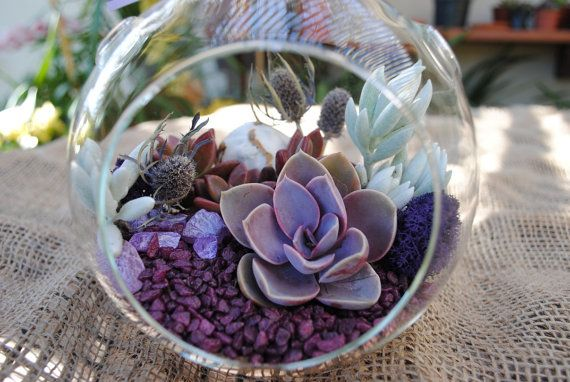 Terrarium with purple and blue tones succulents and dried flowers. Makes a great gift or home decor.  This complete and easy to assemble