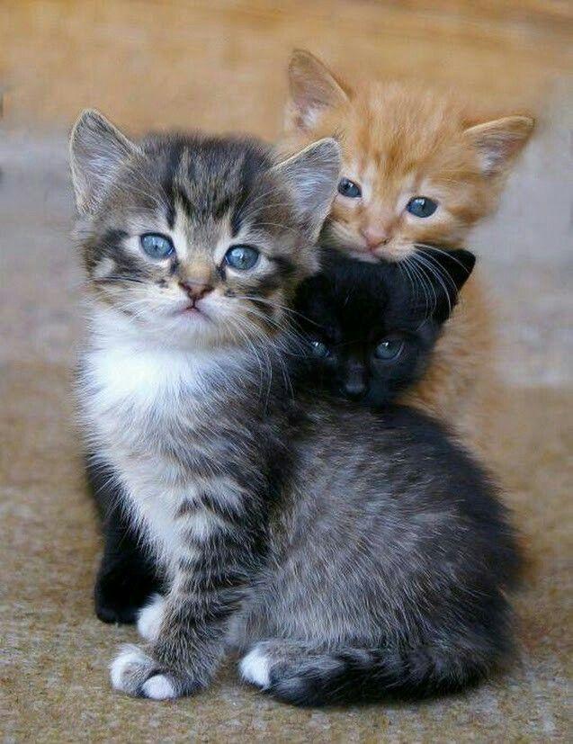 Trop adorable awwwww <3 <3 ****