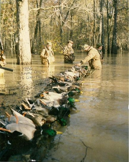 Arkansas Duck Hunting | Duck Hunting Experts | Duck Hunting Videos | Duck Calls and Gear | Green Timber Duck Hunting
