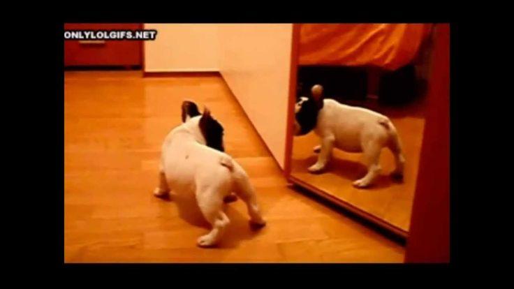 Video de perros y gatos graciosos - Funny dogs and cats #carolinasplajoseginer