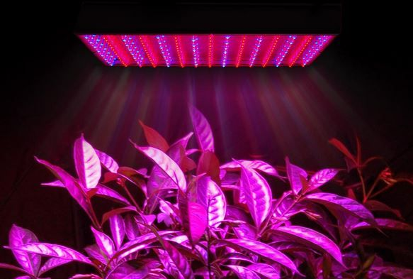 5 Reasons LED Grow Lights are Better Than HID