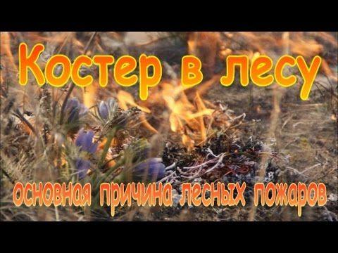 Костер в лесу - основная причина лесных пожаров.