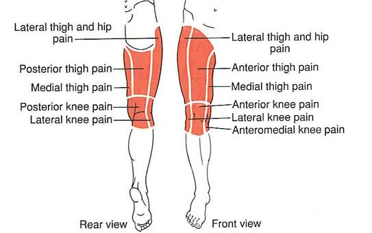 Hip  Thigh  Knee Trigger Point Diagram Sections