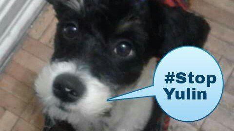 Petizione · Presidente de China: Detener el cruel festival de Yulin · Change.org