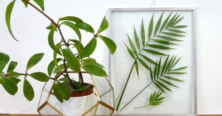les 25 meilleures id es de la cat gorie cadre sous verre sur pinterest plantes sous verre. Black Bedroom Furniture Sets. Home Design Ideas
