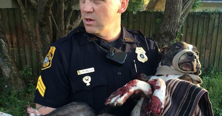 Polícia resgata cachorro baleado e amarrado a trilhos de trem nos EUA