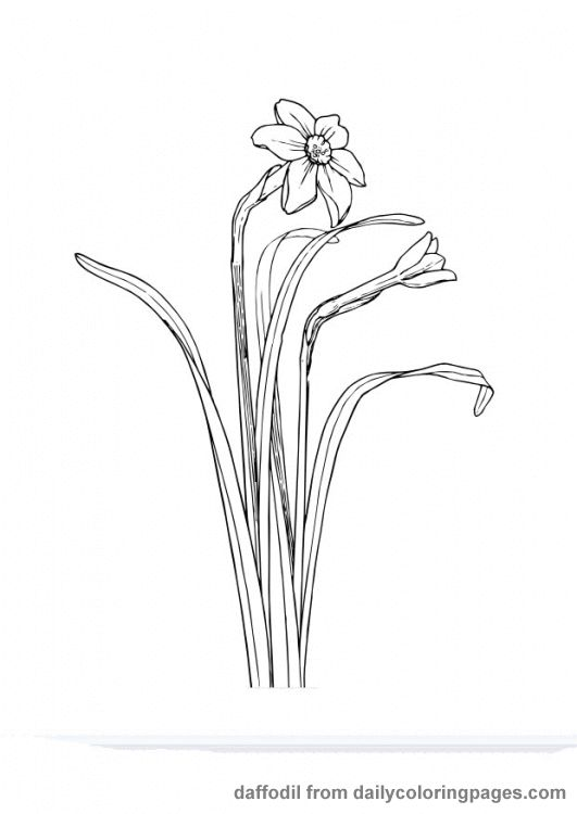 realistic flower coloring pages Great ideas! Pinterest