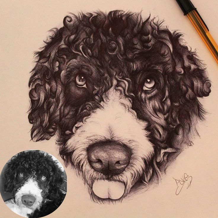 Nico #povetattoo #tattoo #tattoos #malaga #malagatattoo #tattooshop #girltattoo #guytattoo #ink #inkedman #inkedgirl #retrato #portrait #realismo #realism #realistictattoo #bic #bolibic #dog #perro #nico #tattoolife #tattooartistmagazine