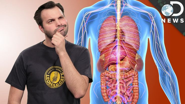 Why Do Some Organs Come In Pairs?
