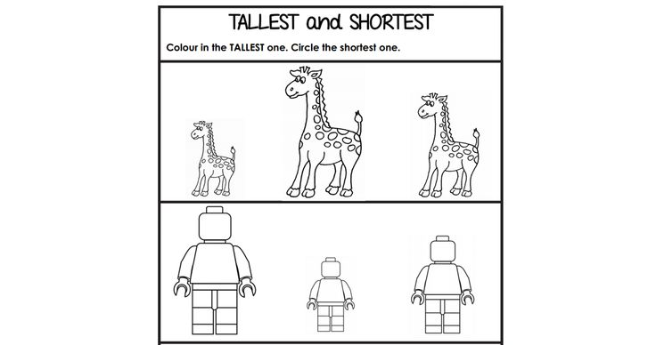 tallest and shortest