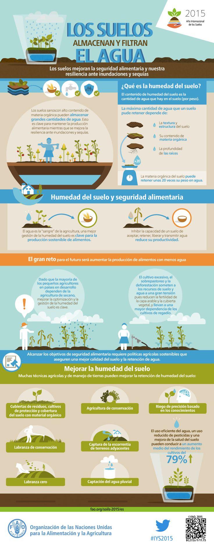 Los suelos almacenan y filtran agua - Estas funciones contribuyen a la seguridad alimentaria y generan resiliencia ante inundaciones y sequías