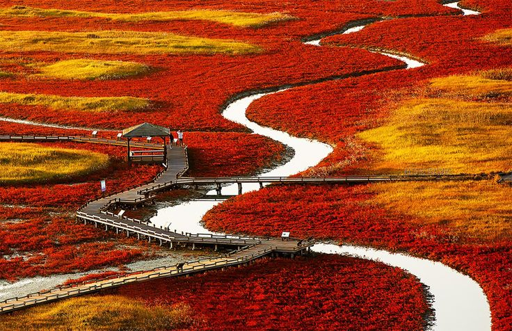 Red Fields Of South Korea Photo Countries Far East Pinterest South Korea Photos And Fields